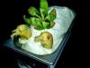 kibana-kiwi-e-banana